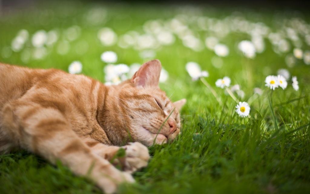 cat resting