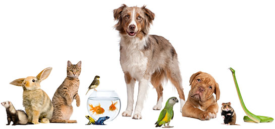 index_dogs_cats_birds_others